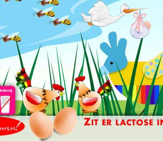 Zit er lactose in eieren