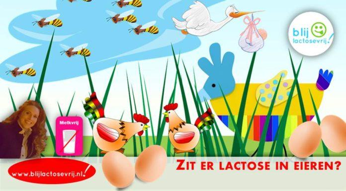 https://blijlactosevrij.nl/wp-content/uploads/2018/01/Zit-er-lactose-in-eieren-696x385.jpg
