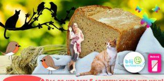 brood met melk