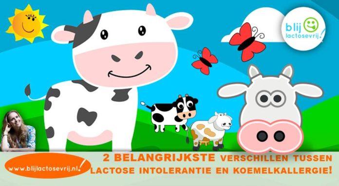 Verschillen tussen lactose intolerantie en koemelkallergie verschil