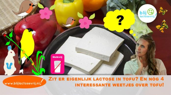 Zit er lactose in tofu, is tofu lactosevrij